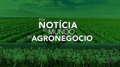 Veja os destaques do mundo do agronegócio no MA - As fortes chuvas que atingem todo o Maranhão tem prejudicado a vida da população e feito cidades decretarem situação de emergência.