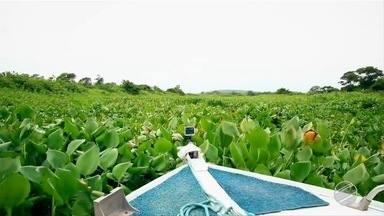 Plantas aquáticas estão dificultando a navegação no rio Negrinho - Força tarefa promete limpar rio Negrinho.