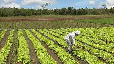 Chuvas de marços têm alegrado agricultores em Sergipe - No município de Laranjeiras, a colheita de hortaliças está indo muito bem.