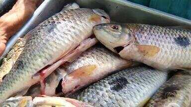 Confira as alterações na pesca e consumo de peixes com a nova Cota Zero - Confira as alterações na pesca e consumo de peixes com a nova Cota Zero