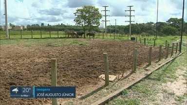 Animais recolhidos nas ruas são alvos de ladrões em Franca, SP - Somente este ano, nove cavalos foram levados.