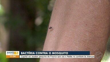 Ministério da Saúde vai usar bactéria para combater Aedes em Campo Grande - Pesquisa mostra que transmissão de doenças cai como método natural