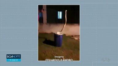 Cobra aparece em rua de Iguatemi - Cascavel foi capturada e solta no meio do mato