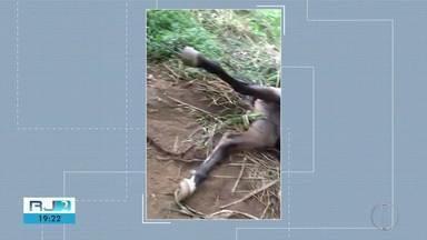 Polícia tenta identificar culpados por morte de cavalo enforcado em Nova Friburgo, no RJ - Assista a seguir.