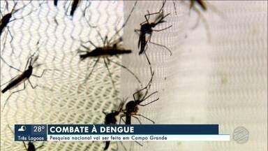 Campo Grande vai combater Aedes aegypti com mosquitos modificados por bactéria - Capital fará parte de pesquisa nacional de combate ao mosquito