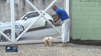 Cachorro é abandonado amarrado às grades de posto de saúde de BH - Animal apresenta os sintomas de leishmaniose.