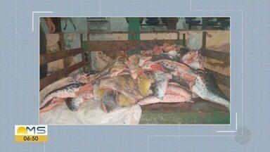 PMA faz operação contra pesca predatória nos rios de MS durante Semana Santa - Feriado prolongado está chegando e os rios de Mato Grosso do Sul devem receber muitos turistas e pescadores. A Polícia Militar Ambiental (PMA) está com uma operação para evitar a pesca predatória.
