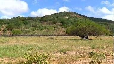 Chuva deixa sertão verde, mas é insuficiente para agricultura - Em Pernambuco, 1,6 milhão de pessoas foram afetadas pela seca no estado. Prejuízos no Nordeste já chegam perto de R$ 3 bilhões