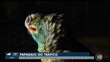 Papagaio que alertou chegada da polícia é transferido para zoológico - Papagaio que alertou chegada da polícia é transferido para zoológico