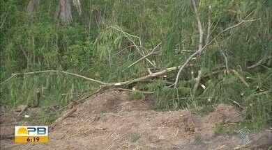 Construtora que derrubou árvores para construir condomínio apresenta autorização da Sudema - A ressalva é que a empresa utilize a madeira cortada ainda no terreno ou doe para instituições de caridade.