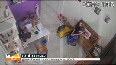 Mulher abandona 7 gatos em pet shop da Asa Norte - Ela deixou os animais numa caixa e saiu da loja dizendo que tinha esquecido a carteira. O fato foi no sábado (27) e até hoje os gatos estão no local.