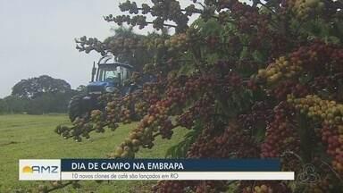 Embrapa lança 10 novos clones de café em Porto Velho - undefined