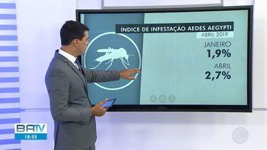 Índice de infestação do mosquito da dengue tem aumento em Salvador - Número de áreas de risco quase triplicou na capital baiana.Veja quais os pontos que têm mais perigo.