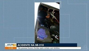 Três pessoas ficam feridas após choque de veículos com búfalos na BR-210, em Macapá - Acidente aconteceu por volta de 22h30 de quarta-feira (15). Animais morreram.
