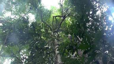 Conheça o 'Parque do Pau Brasil' em Porto Seguro, que reúne árvores centenárias - O local preserva diversas espécies nativas.