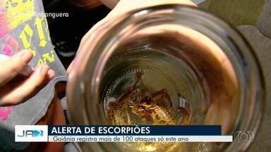 Mais de 100 ataques de escorpião foram registrados este ano em Goiânia - Risco é maior entre os mais velhos e as crianças.