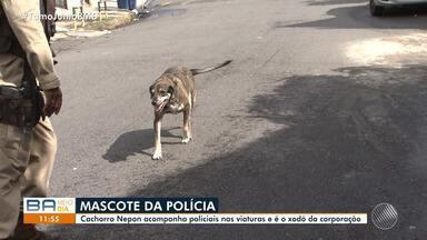 Cachorro vira mascote de corporação da polícia em Salvador - Vira-lata atropelado virou mascote dos policiais e hoje vive na Companhia.