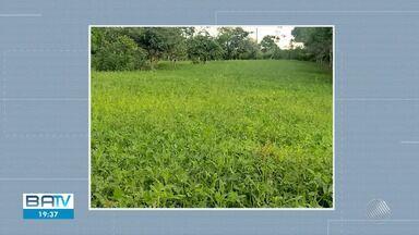 Previsão do tempo: chuva contribui para o plantio de amendoim em Santo Antônio de Jesus - Confira também as temperaturas para Salvador e outras cidades baianas na quarta-feira (22).
