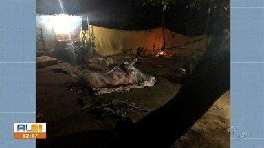 Operação tira toneladas de carnes imprópria para o consumo humano em Arapiraca - Pessoas foram autuadas pela pratica de abate clandestino.