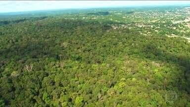 Governo quer usar fundo da Amazônia para indenizar desapropriações - Fundo recebe doações da Noruega e da Alemanha para combater desmatamento na floresta e já tem R$ 3,4 bilhões administrados pelo BNDES.