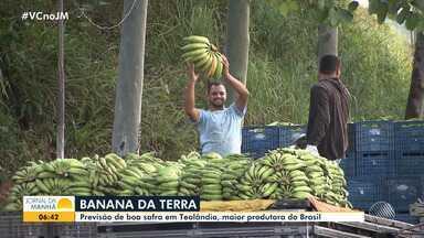 JM no Campo mostra as curiosidades da Bahia Farm Show e discute a alta no preço da banana - Confira as novidades do agronegócio no quadro semanal do JM.