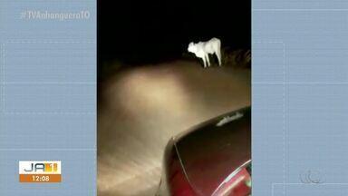 Motorista filma animal solto em rodovia escura da TO-348 - Motorista filma animal solto em rodovia escura da TO-348