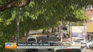 Árvore sem poda prejudica visibilidade de motoristas e motociclistas no Jardim Paulista - O semáforo da Avenida Treze de Maio com a Rua Itararé foi encoberto por galhos.