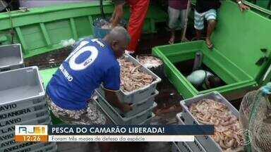 Pesca do camarão é liberada em Angra dos Reis - Foram três meses de defeso da espécie.