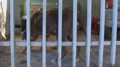 Polícia Civil encontra animais com sinais de maus-tratos dentro de casa em Rio Preto - A Policia Civil encontrou um cachorro morto e outros dois com sinais de maus-tratos dentro de uma casa no bairro Boa Vista, em São José do Rio Preto (SP), nesta quarta-feira (5).