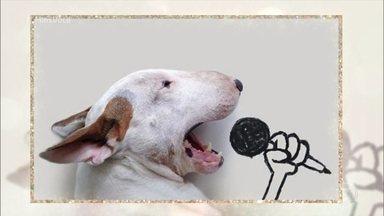 Conheça os animais que fazem sucesso nas redes sociais - O cãozinho Jimmy tem mais de 600 mil seguidores e já conquistou até o ator americano Ashton Kutcher. As araras Pipa e Bambu também fazem sucesso na internet