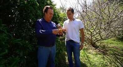 Pedro Leonardo conheceu pomar de frutas raras em Rio Claro (SP) - Pedro foi conhecer uma coleção de frutas raras, com mais de 2500 espécies diferentes