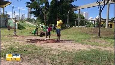 Maratona Verde planta 10 mil mudas de árvores no Recife - Atividade aconteceu em comemoração à Semana do Meio Ambiente.