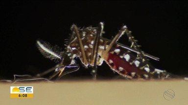 Pesquisa da UFS aponta que apenas repelente não é suficiente para prevenir a dengue. - Pesquisa da UFS aponta que apenas repelente não é suficiente para prevenir a dengue.