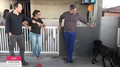 Alexandre Rossi dá dicas para cães resistentes a beber água - Cachorro tem compulsão por brincar com a água e acaba ficando desidratado