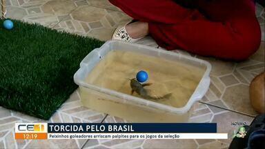 Peixinhos goleadores arriscam palpites para os jogos da seleção - Confira mais notícias em g1.globo.com/ce