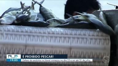 Defeso da sardinha vai até 31 de julho em Angra dos Reis - Objetivo é respeitar o crescimento dos peixes jovens, que precisam chegar até 17 centímetros para a captura.