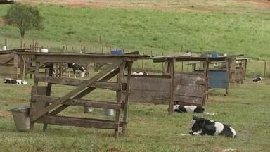 Oferecer água de qualidade ao gado traz bons resultados ao rebanho - A água de qualidade é essencial para que o criador de gado obtenha bons resultados com o rebanho.
