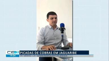 Radialista e vigilante foram picados por jararacas em Jaguaribe - Confira mais notícias em g1.globo.com/ce
