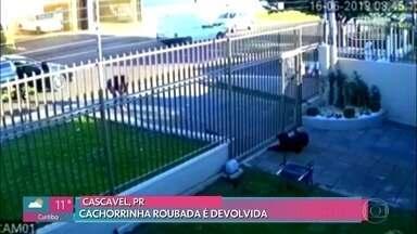 Cachorrinha furtada em Cascavel é devolvida - Família acreditava que animal tinha fugido, mas imagens de uma câmera de segurança mostraram momento em que ela foi furtada por uma mulher
