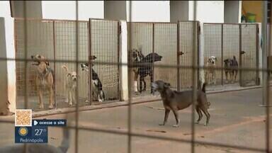 Associação de Uberlândia realiza campanha do agasalho para animais - Associação de Proteção Animal está recebendo agasalhos para esquentar os animais de rua e evitar doenças respiratórias.