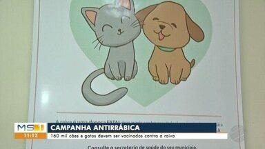 Campanha deve vacinar 160 mil cães e gatos contra a raiva em Campo Grande - Meta é imunizar 80% dos animais