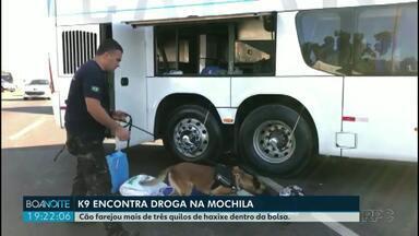 Cão farejador encontra droga em mochila de uma passageira - A mulher estava em um ônibus que fazia a linha Foz do Iguaçu até Curitiba. O cão farejou mais de três quilos de haxixe.