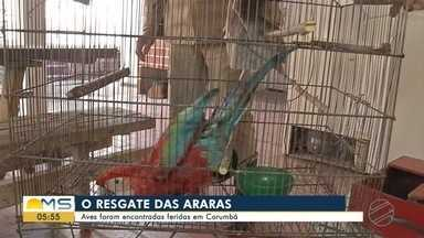 Araras são encontradas feridas em Corumbá - Devem ser transferidas para o Centro de Reabilitação de Animais Silvestres (Cras), em Campo Grande, as duas araras que foram encontradas feridas pelo Corpo de Bombeiros nesta semana em Corumbá.