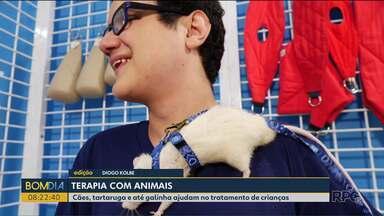 Animais ajudam em terapia com crianças e adolescentes - Cães, tartarugas e até uma galinha ajudam nas terapias em clínica de Curitiba.