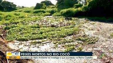 Secretaria do Meio Ambiente vai investigar as causas dos peixes mortos em Fortaleza - Saiba mais em g1.com.br/ce