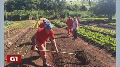 G1 destaca trabalho de detentos que doa alimentos para instituições em Botelhos (MG) - G1 destaca trabalho de detentos que doa alimentos para instituições em Botelhos (MG)