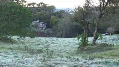 Produtores rurais calculam prejuízos após frio e geadas - Em Indianópolis, no Triângulo Mineiro, o frio queimou a lavoura de café.