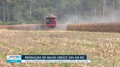 Conab registra aumento de 20% na produção do milho em Rondônia - Mais de 800 mil toneladas foram colhidas na safra deste ano.