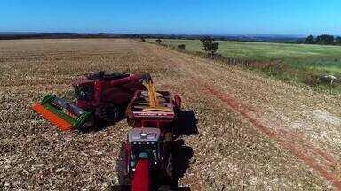 Produção do milho pode chegar a marca histórica para sua segunda safra no Brasil - Produtores do Triângulo Mineiro já começaram a colheita.