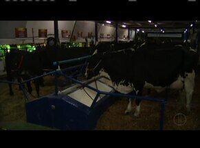 Concurso leiteiro da Expoagro mostra toda a potência da pecuária leiteira do Leste de MG - Disputa fica mais acirrada a cada ano.